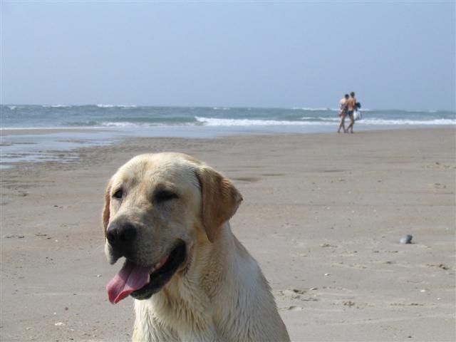 beach 023 (Small).jpg