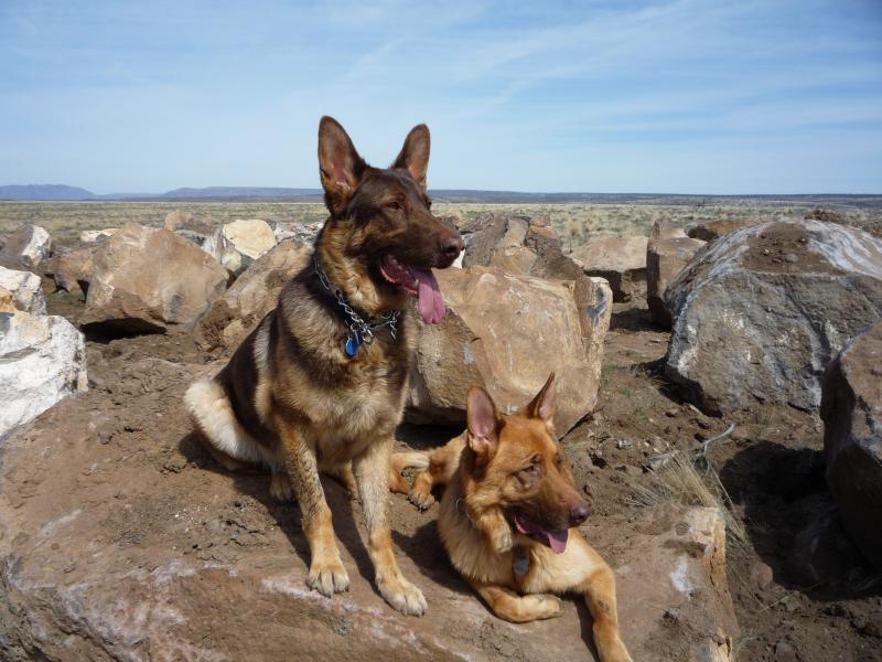 Desert March 2009 057.jpg
