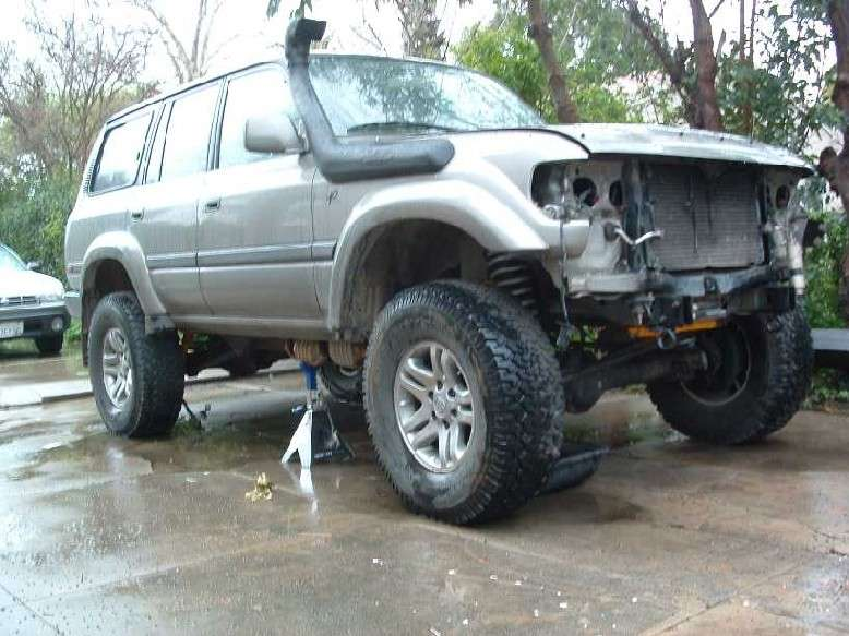 driveway carnage.JPG