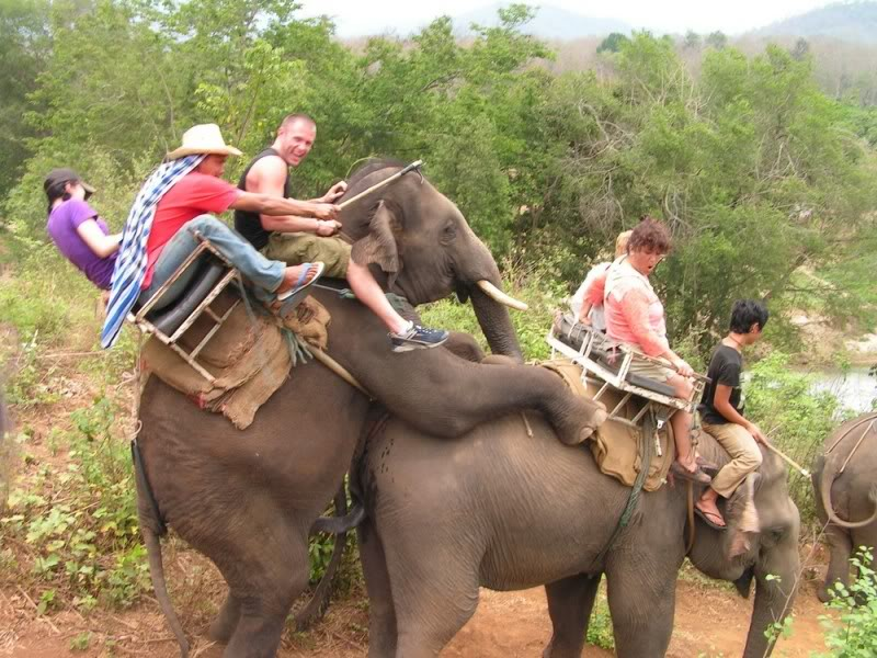 elephant-ride-sex.jpg