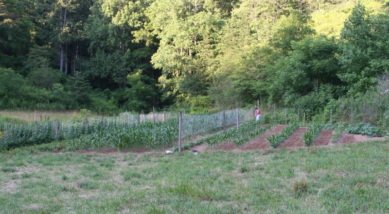 garden 09 003.jpg