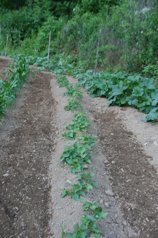 garden 09 036.jpg