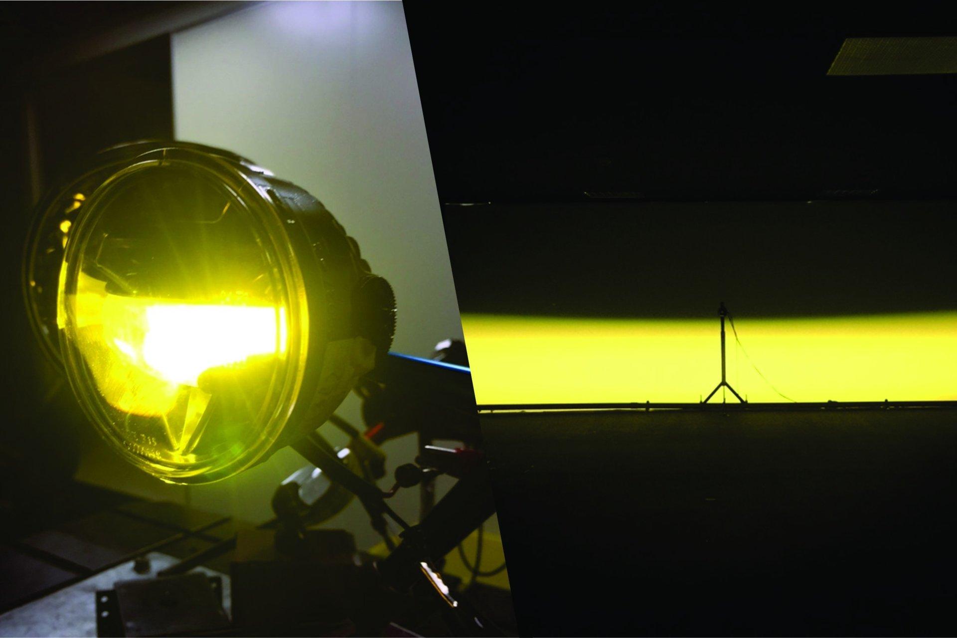 lf yellow.jpg
