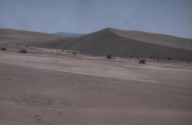 Lost_Forest_Sand_Dunes_Lakeview_BLM,_Oregon.jpg