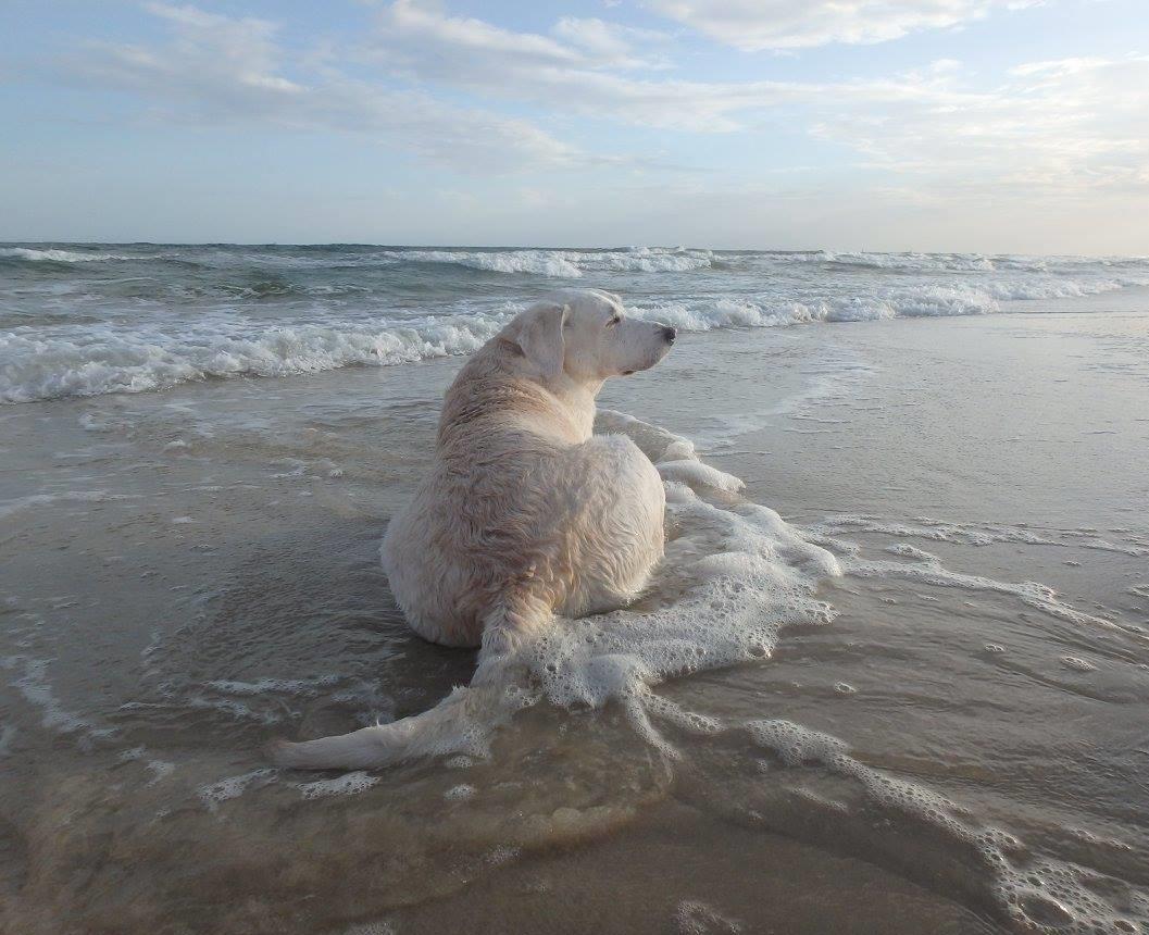 pearl beach AL.jpg
