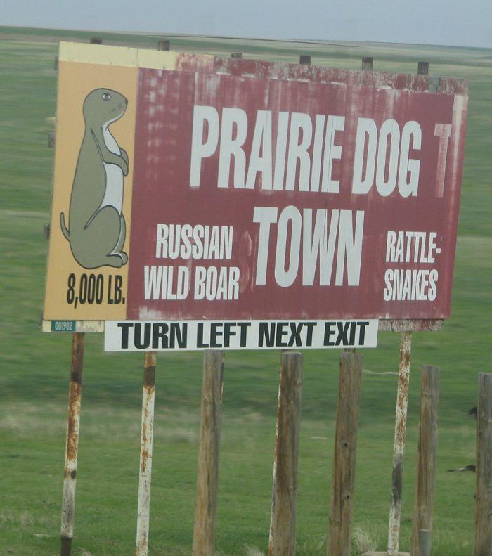 prairie dog.jpg