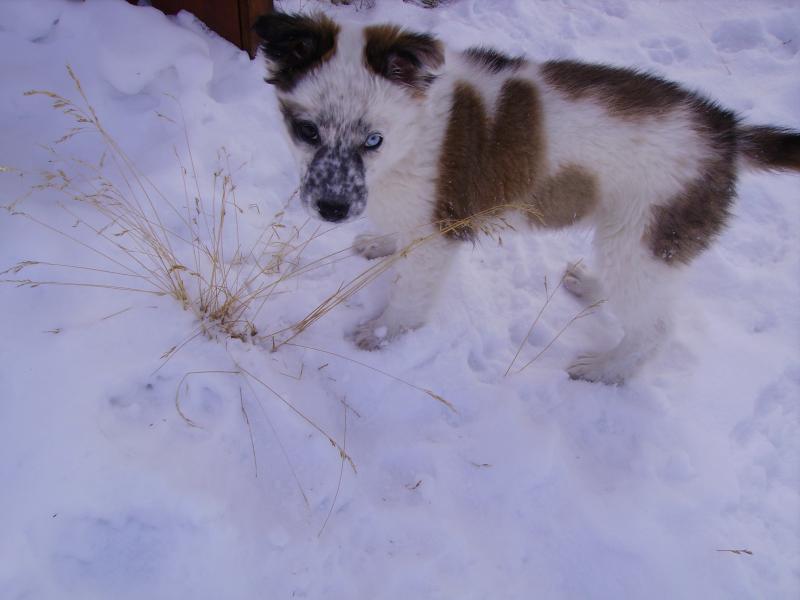 puppy 004.jpg