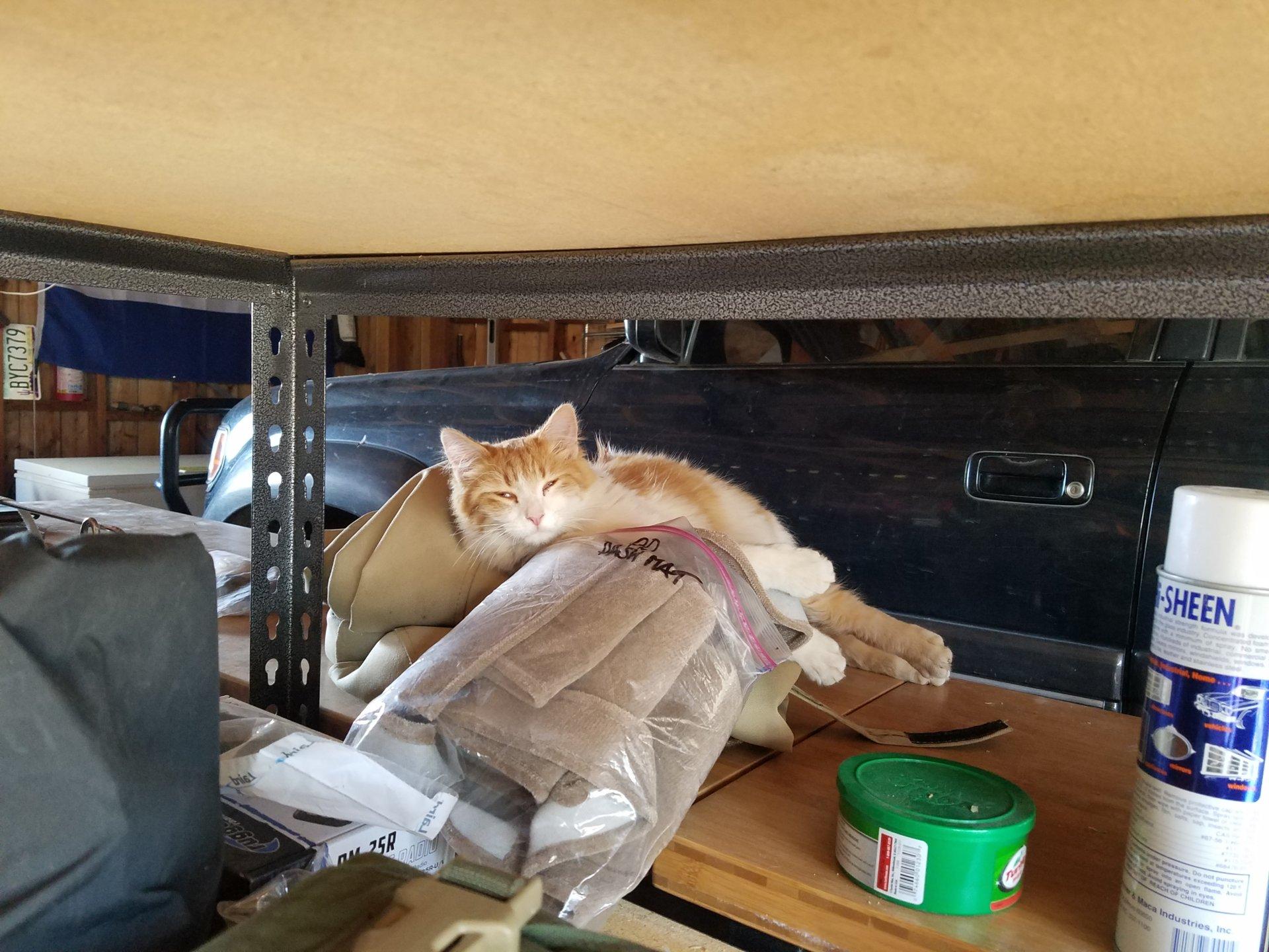 Shop Cat.jpg