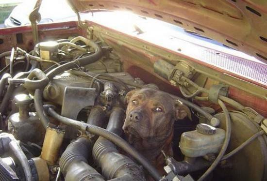 dog in engine bay.jpg