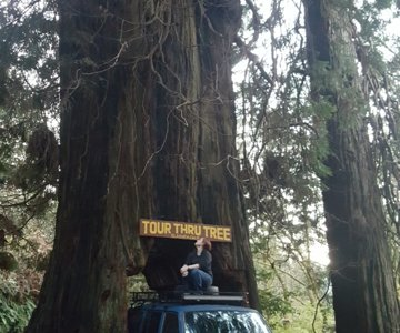 Drive-Thru Tree in northern California